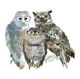 Smart as an Owl