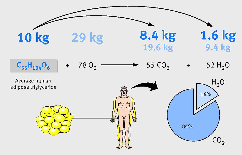 Transformation de la graisse