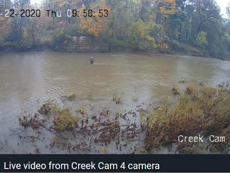 Elk Creek Stream Report - by Jack Kearney