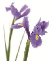 flower-sml.jpg