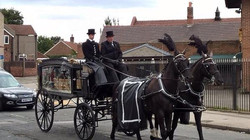 Black horse & drawn carriage