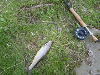 Defy the Cold; Fish for Trout!