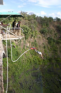 Victoria Falls Activities Centre based in Victoria Falls, Zimbabwe. What to do or things in Victoria falls, visit the main Falls, White water rafting on Zambezi river, helicopter flight, lion walk, elephant ride, devil's pool swim, micro light, chobe safari, Hwange safari, bungee jump, gorge swing, croc cage diving, sunset cruise, gorge hike, overnight camping & multi day rafting. for all your tours and  adventures activities in Victoria Falls