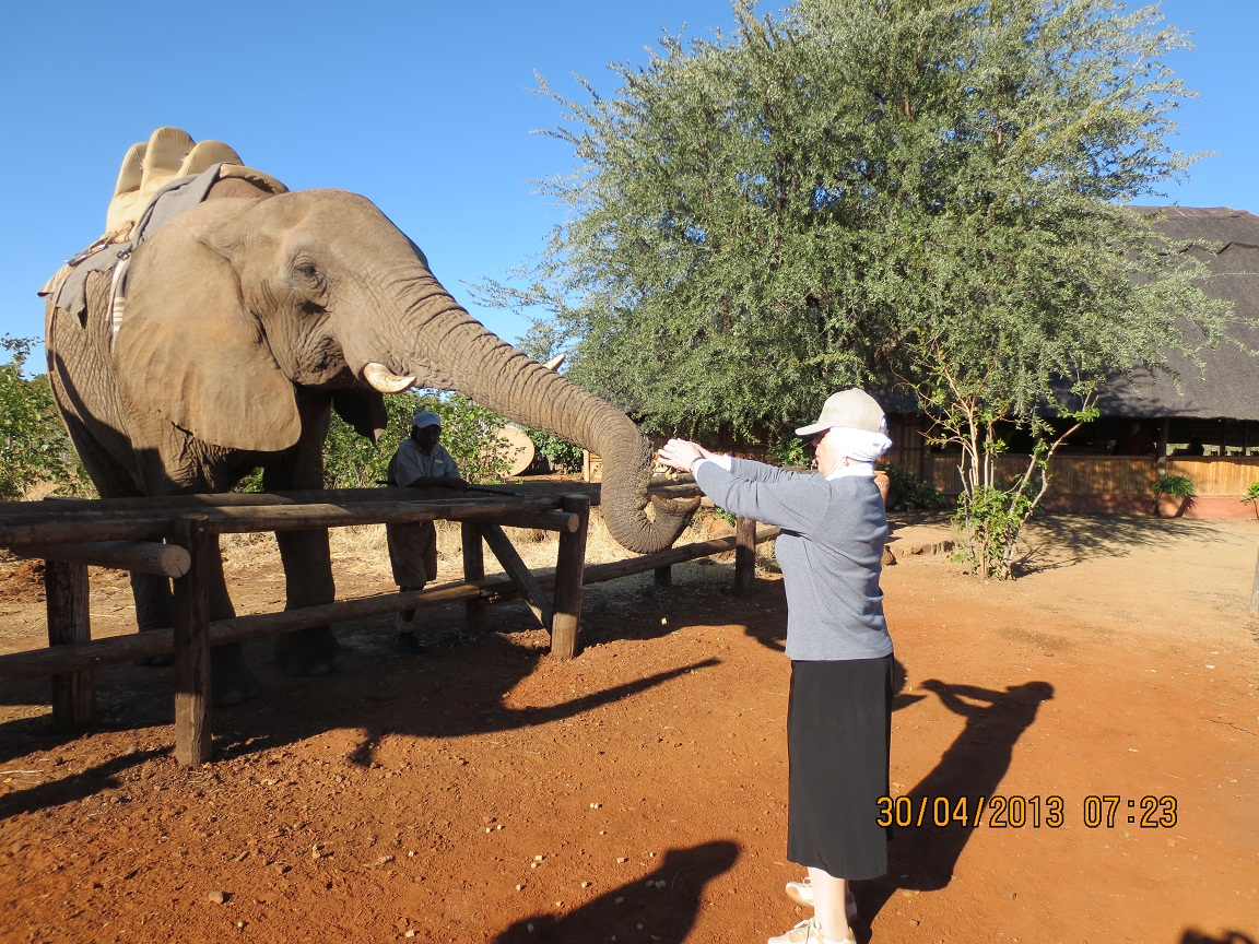 Feeding Elephant in vic Falls