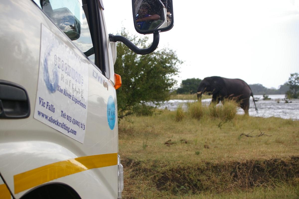 ELEPHANTS ON ZAMBEZI RIVER RAFTING FLOAT