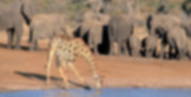 Hwange National Park Safari about 2hrs drive from  Victoria Falls tours provided by Shockwave Adventures