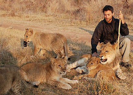 Hwange Lion walk safari in Victoria Falls tours provided by Shockwave Adventures