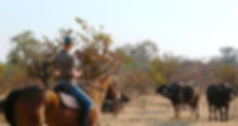 Hwange NationHorse back ride safari in  Victoria Falls tours provided by Shockwave Adventures