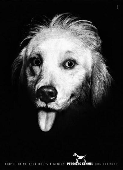 panfleto de comida para cachorro mostrando um cachorro mostrando a língua igual a Einstein