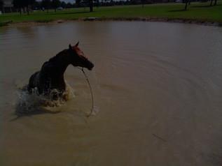 Bonus Loves the Water!