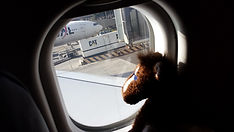 Buck looking out airplane window