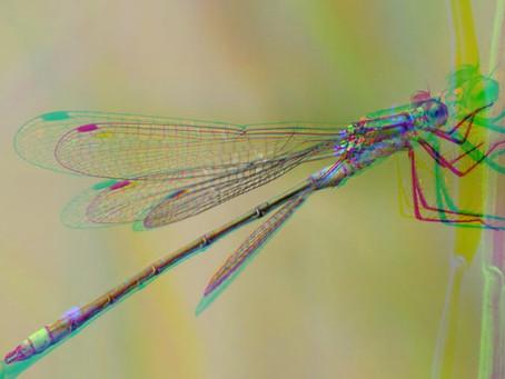 """""""Die Libelle"""" Grundsatz der Anpassung"""