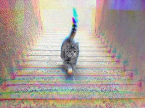 Geht die Katze die Treppe hoch oder runter?