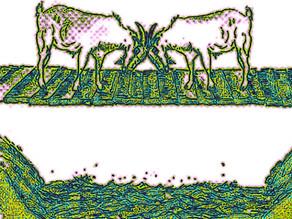 Die beiden Ziegen