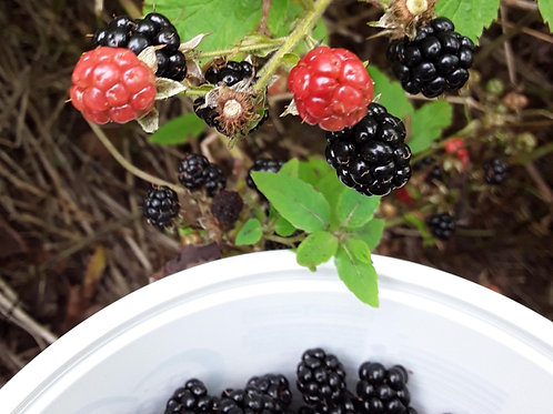 Blackberry Jelly 125ml