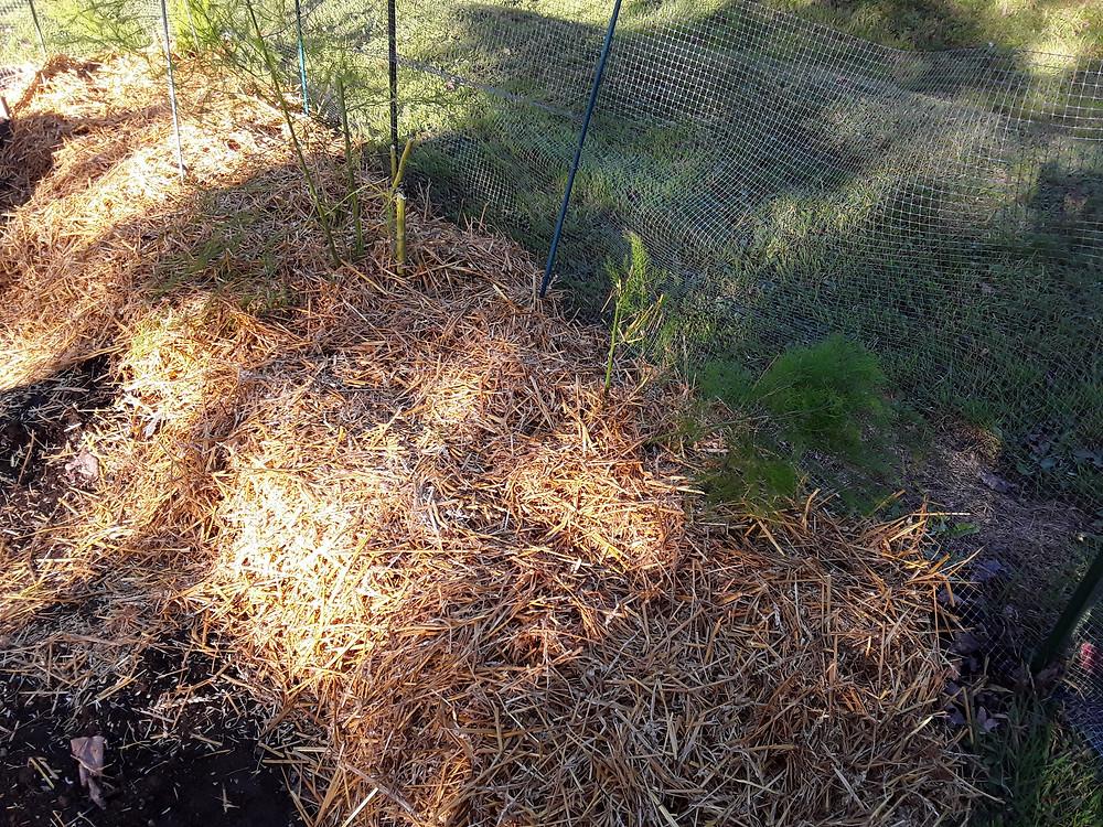 straw mulched garden bed