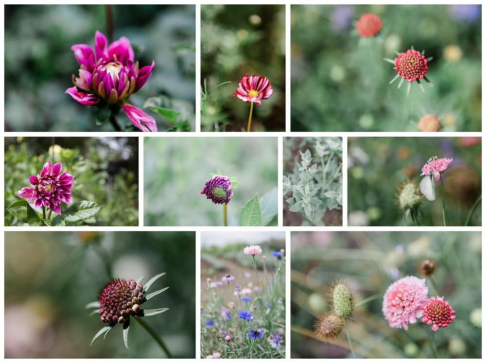 Bloemen, Tuin, plukken, Laura Nieuwkoop fotografie., Waalwijk, Waspik, Tilburg, Den Bosch