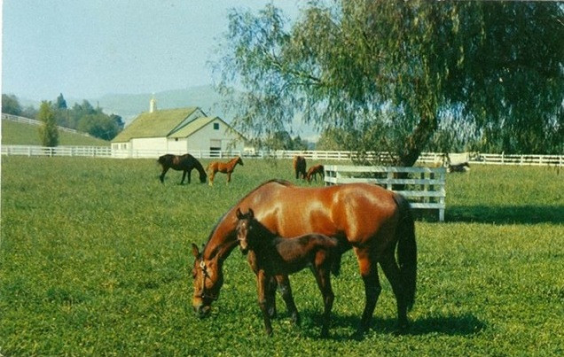 Northridge Farms