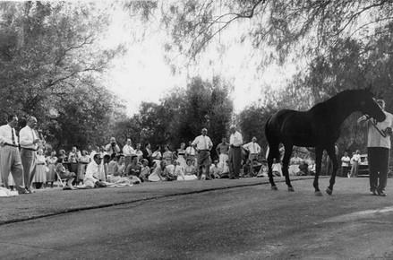 Guests at Northridge Farms Sunday BBQ c. 1955