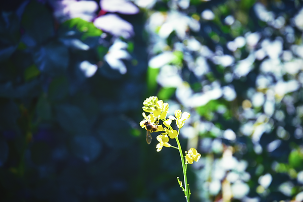 Bee Flower .png