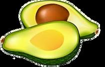 Avocado Vector.png
