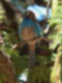 Bird Watching Lalibela Ethiopia