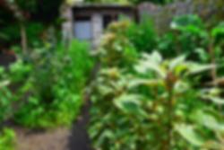 Garden Retreat 4.png