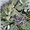 Thumbnail: Succulent Garden