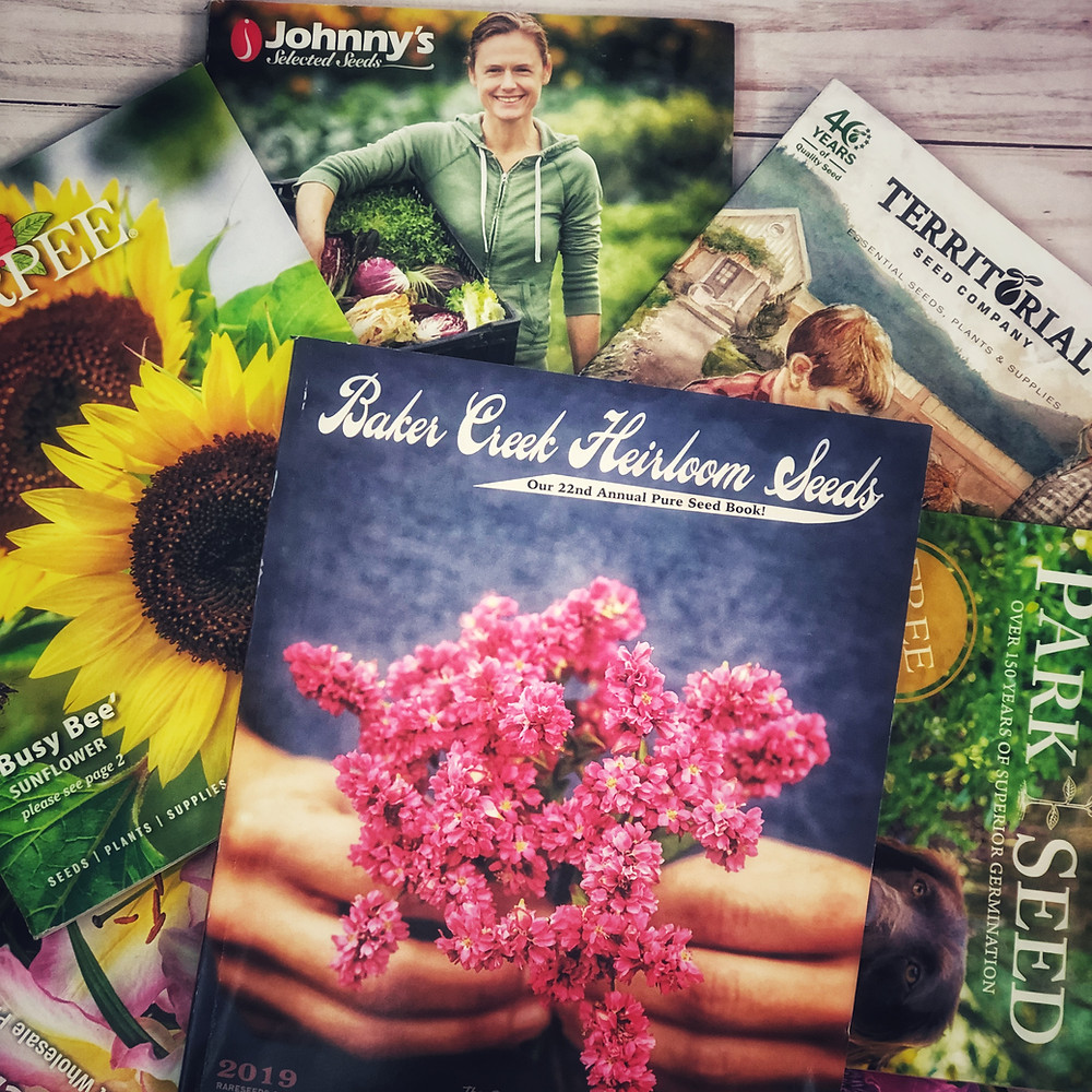 Where to buy seeds. Starting a garden.  Flower seeds.