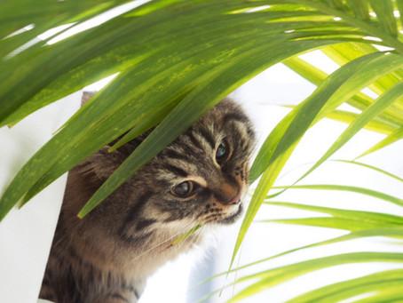 11 Pet Friendly Plants