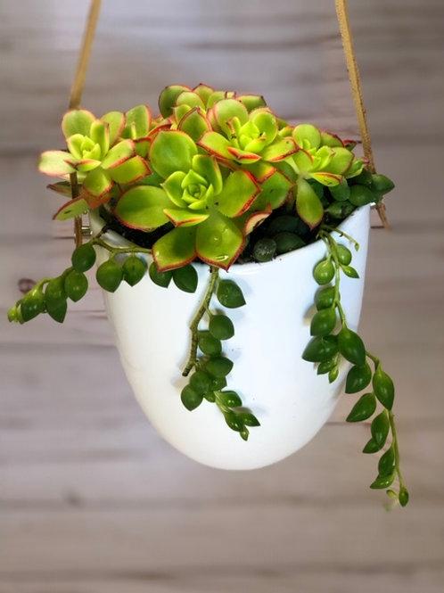 Hanging Succulent Arrangment