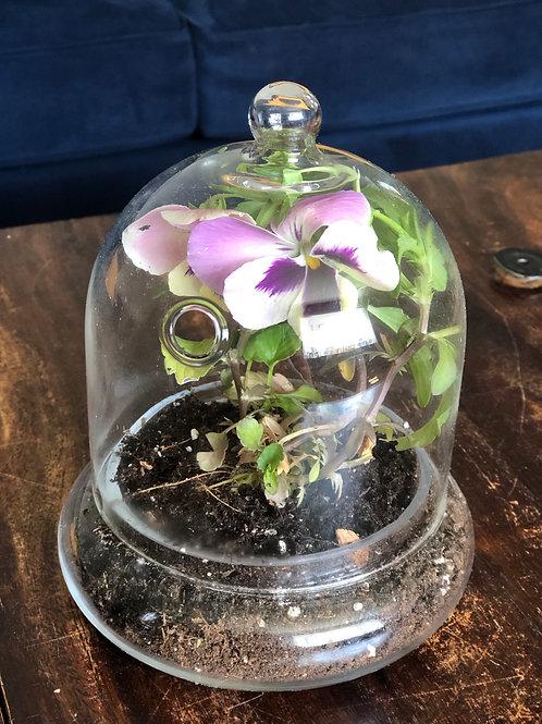 Cloche Plants