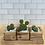 Thumbnail: Cactus Trio