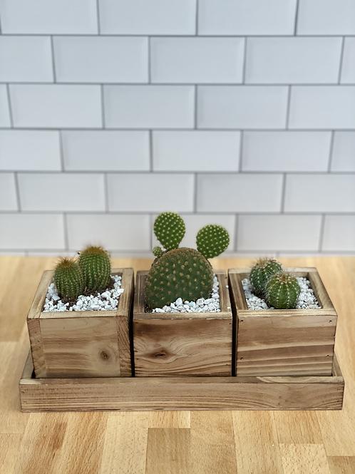 Cactus Trio