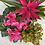 Thumbnail: Pink Plant Collection