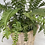 Thumbnail: Fern Collection
