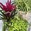 Thumbnail: Pet Friendly Plant Collection