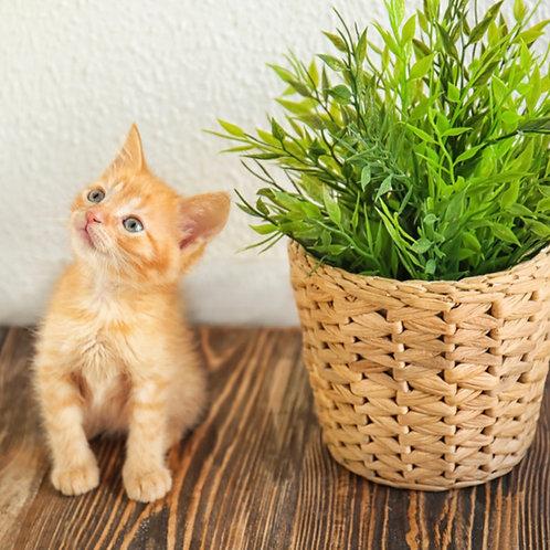 Pet Friendly Plant Collection