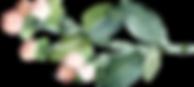 Hypericum%2520berries_edited_edited.png