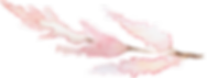 Pink%2520astilbe_edited_edited.png