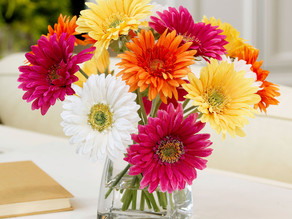 Top 4 Gorgeous (and Affordable) Flowers For Every Season!