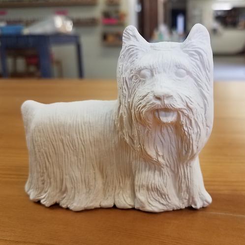 Dog - Yorkie