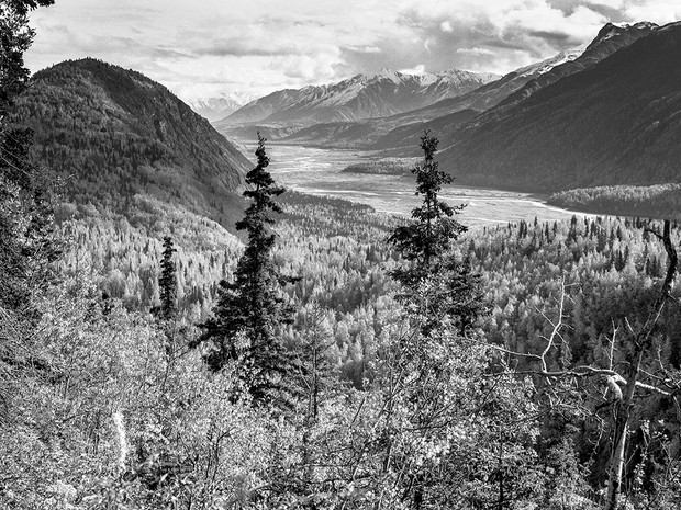 Fall in the Matanuska Susitna Valley.  Nagaoka 4x5 Wood Field, 210mm Caltar II-N, Kodak TMax 400.