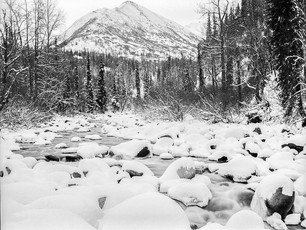Winter along the Little Susitna River.  Mamiya RB67 Pro SD, 90mm Sekor C, TMax 400.