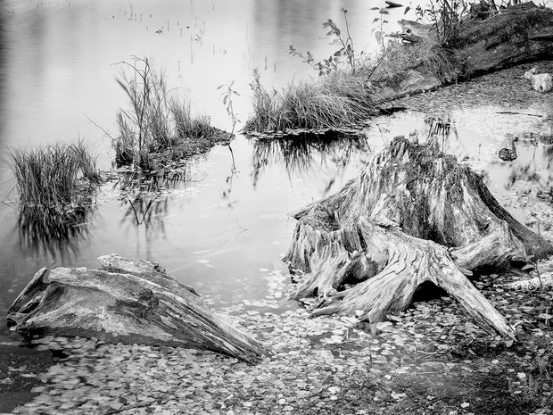 Edge of the Lake.  Chamonix 045N-2, 210mm Caltar II-N, Ilford HP5+.