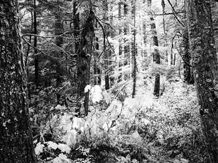Early morning light in the Chugach National Forest.  Toyo 45A II, 150mm Symmar-S, Kodak TMax 100.