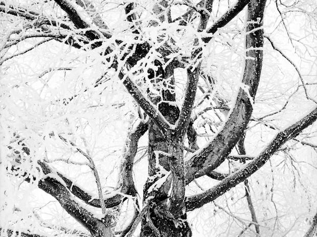 Frosty Birch.  Mamiya 645 Pro TL, 55mm Sekor, Kodak TMax 400.