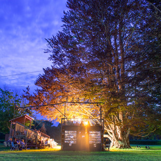 A brightly lit theatrical stage underneath a large copper beech tree.