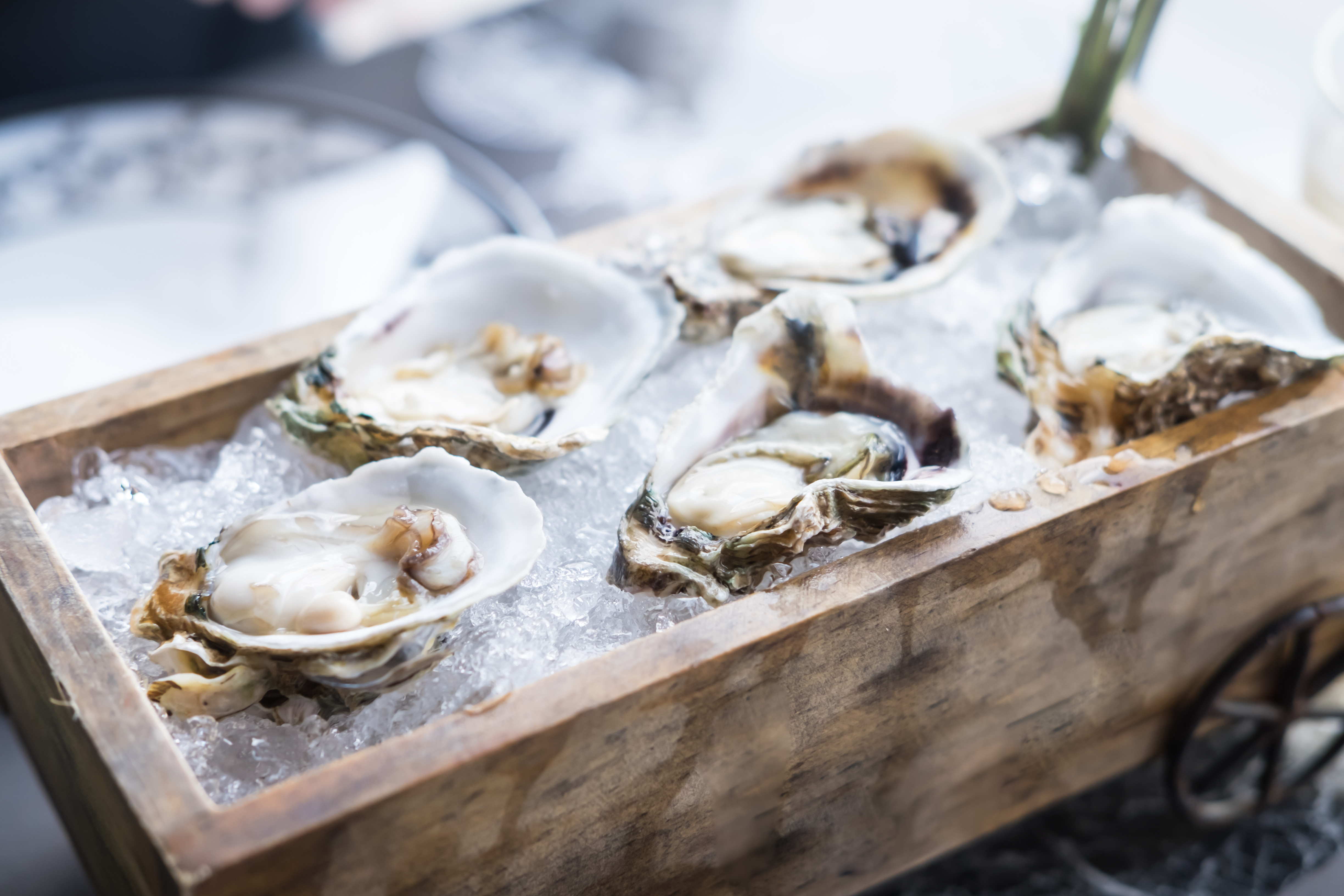Fresh oysters on wooden tray, food backg