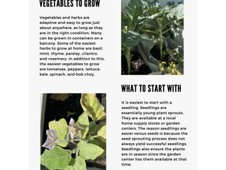 Growing Herbs and Vegetables in Pots by Dietetic Intern Meghan Sauder